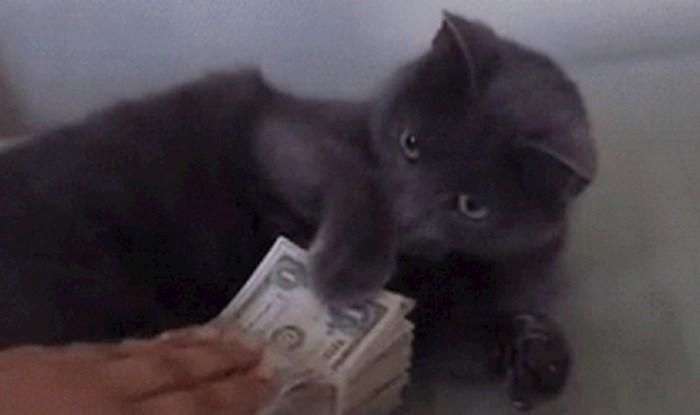 Morate vidjeti reakciju ove mace kad joj pokušaju uzeti novac