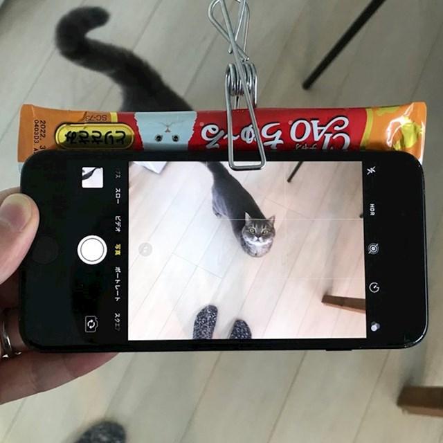 Lik je pričvrstio mačju poslasticu na mobitel i tako postigao da ona gleda u kameru