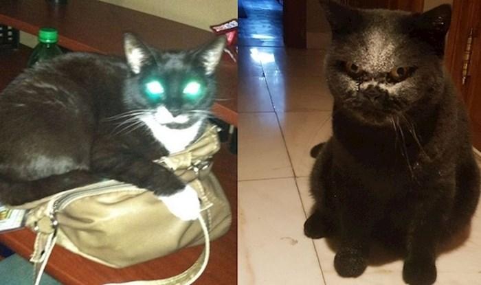 15 mačaka zbog kojih su njihovi vlasnici skoro zvali egzorcista