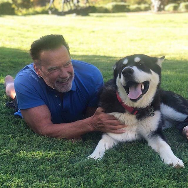 Arnold Schwarzenegger i Dutch