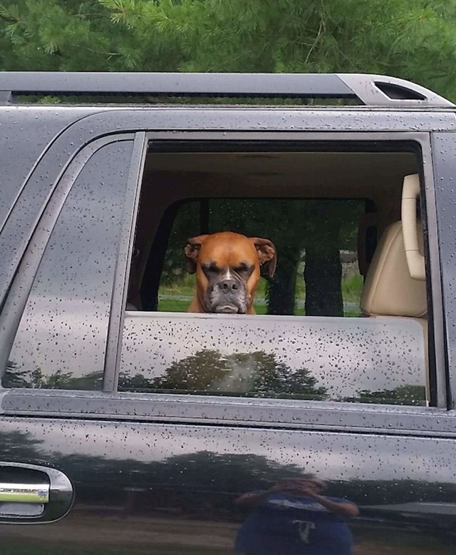"""""""Pas mog frenda nije sretan što odlazi iz psećeg parka"""""""