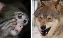 Jedan zoološki vrt podijelio je slike životinja kojima ponedjeljak ujutro pada teže nego vama