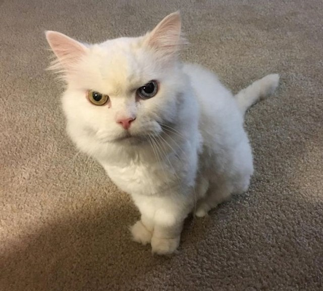 """""""Mačka mog frenda samo sjedi i gleda te osuđujućim pogledom"""""""