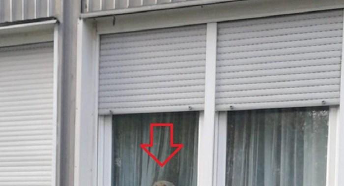 """Na internetu su ga nazvali """"čuvar Borongaja"""", pogledajte tko to vreba na prozoru"""