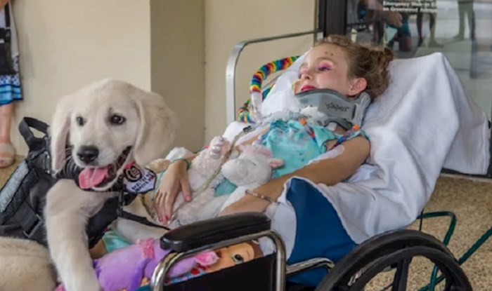 Obitelj je zabilježila dirljiv susret paralizirane djevojčice i njenog budućeg psa pomoćnika