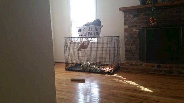 """""""Morala sam ju zatvoriti u pseći kavez jer je grizla namještaj...mislim da je poludjela"""""""