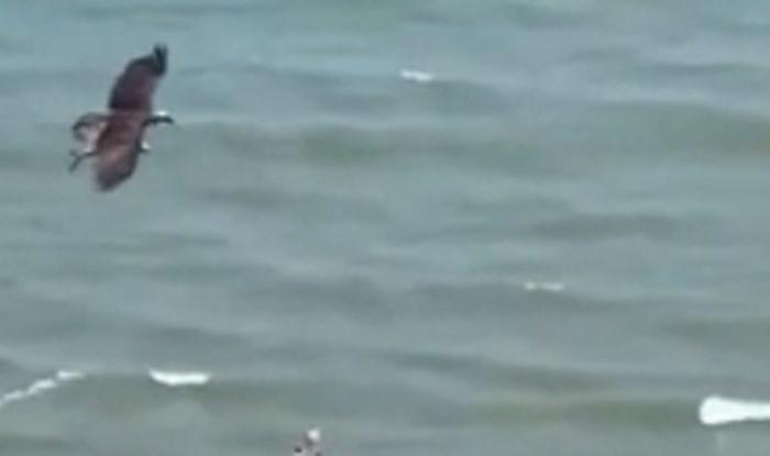 Ljudi su snimili jezivu scenu na jednoj plaži, što ta ptica nosi?