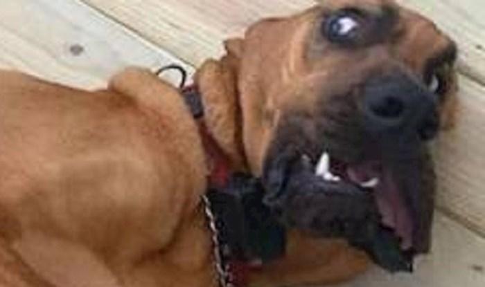 Morate vidjeti čega se ovaj pas toliko prestrašio
