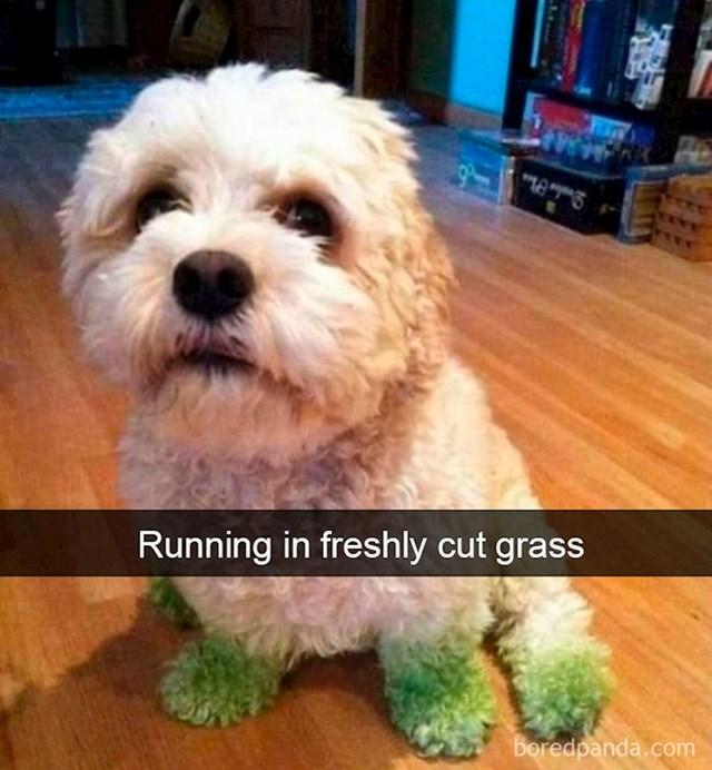 Trčanje kroz svježe pokošenu travu