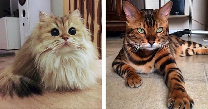 Preslatke mačke koje će se svidjeti i zagriženim ljubiteljima pasa