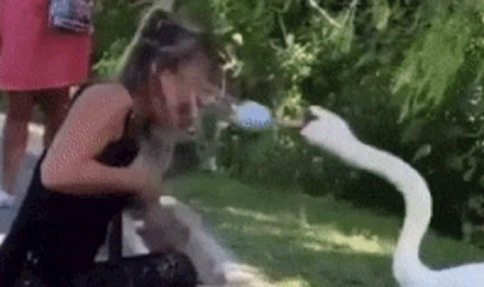 Žena je prišla labudu, ovo što je on učinio iznenadilo je sve prisutne