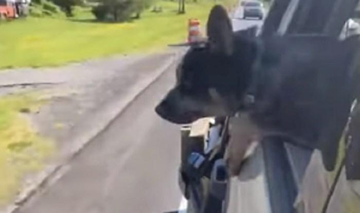 Vlasnici su skoro zaplakali od smijeha kada su vidjeli što njihov pas radi u vožnji