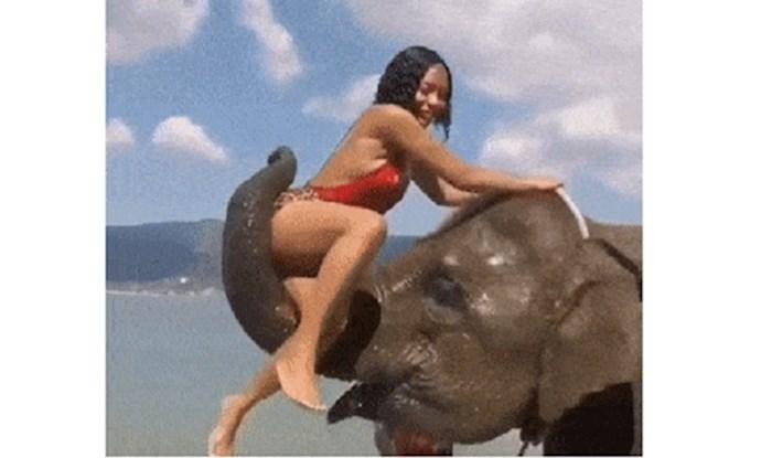 Iskoristila je slona za slikanje za Instagram, on joj pokazao što misli o tome