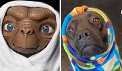 Ljudi dijele fotke svojih pasa koji nalikuju likovima iz crtića