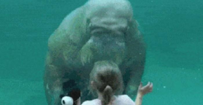 Djevojčica je prišla moržu u zoološkom vrtu, on ju je iznenadio svojom reakcijom