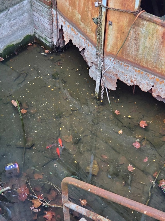 Ribice u podrumu napuštene zgrade u Philadelphiji
