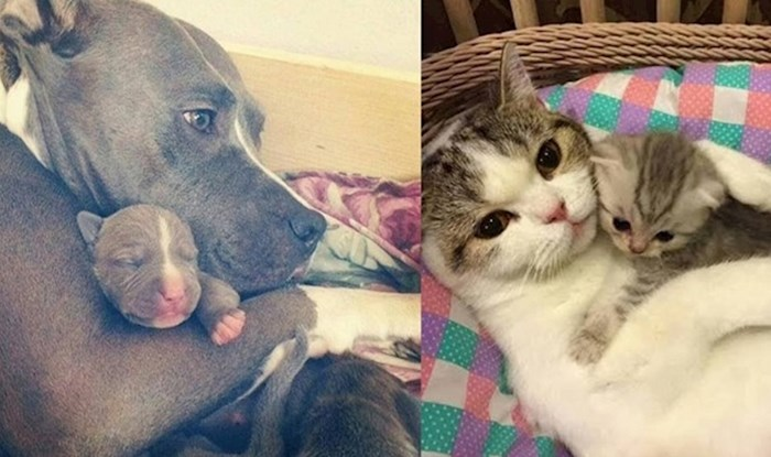 16 obitelji iz životinjskog svijeta zbog kojih ćete poželjeti zagrliti svoje roditelje