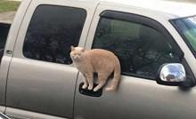 14 fotografija koje dokazuju da su mačke s neke druge planete