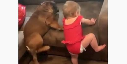 VIDEO Beba i pas imaju isti problem, oboje se pokušavaju popeti na kauč, ali u tome ne uspijevaju