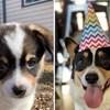 Vlasnici su usporedili kako su njihovi psi izgledali kao bebe i kako izgledaju sada