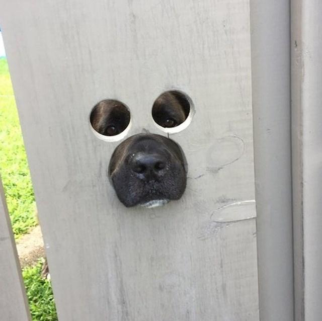 """""""Moj prijatelj je izbušio rupe na ogradi kako bi njegov pas mogao promatrati ulicu"""""""