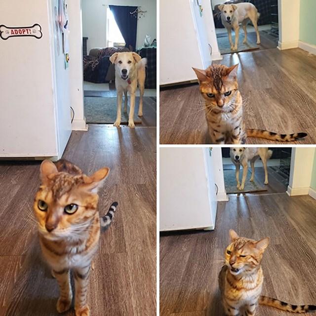 Mačka se došla žaliti vlasnici jer joj je pas pojeo hranu...