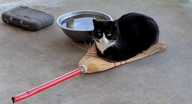 """""""Moja mačka je vještica"""""""