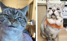 15 maca koje možda ne izgledaju savršeno, ali su svojim šarmom osvojile sva srca