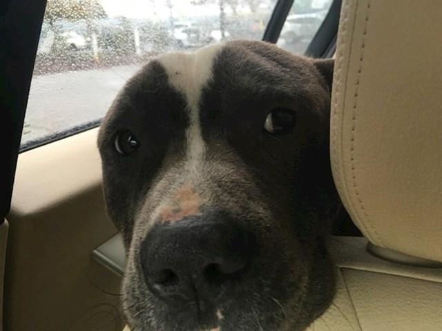 """""""Pronašao sam i spasio dva gladna psa koji su jeli smeće na ulici"""""""