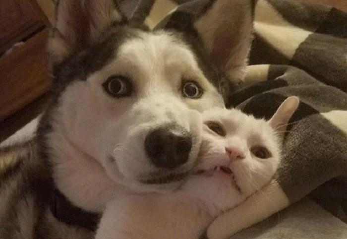 Urnebesne fotke životinja koje će vas dobro nasmijati