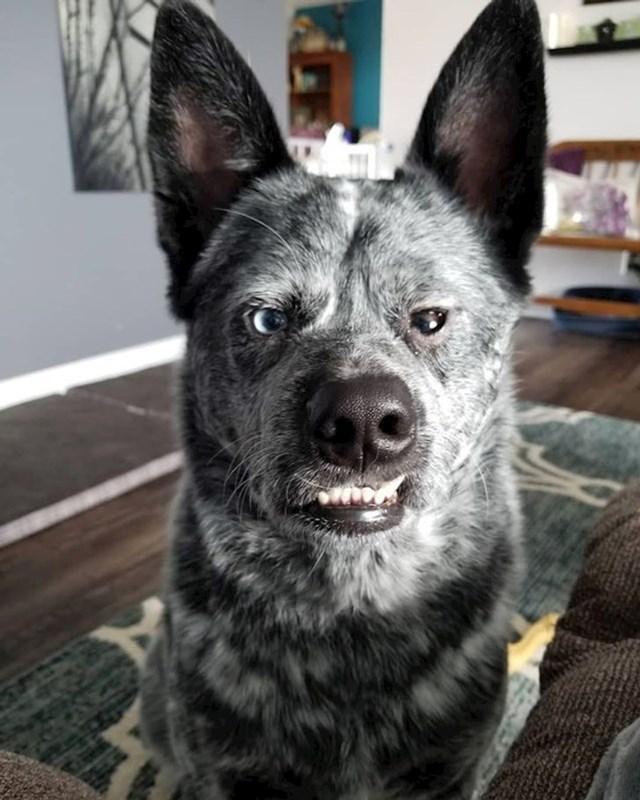 """""""Naš pas Moose izgleda kao traženi kriminalac..."""""""