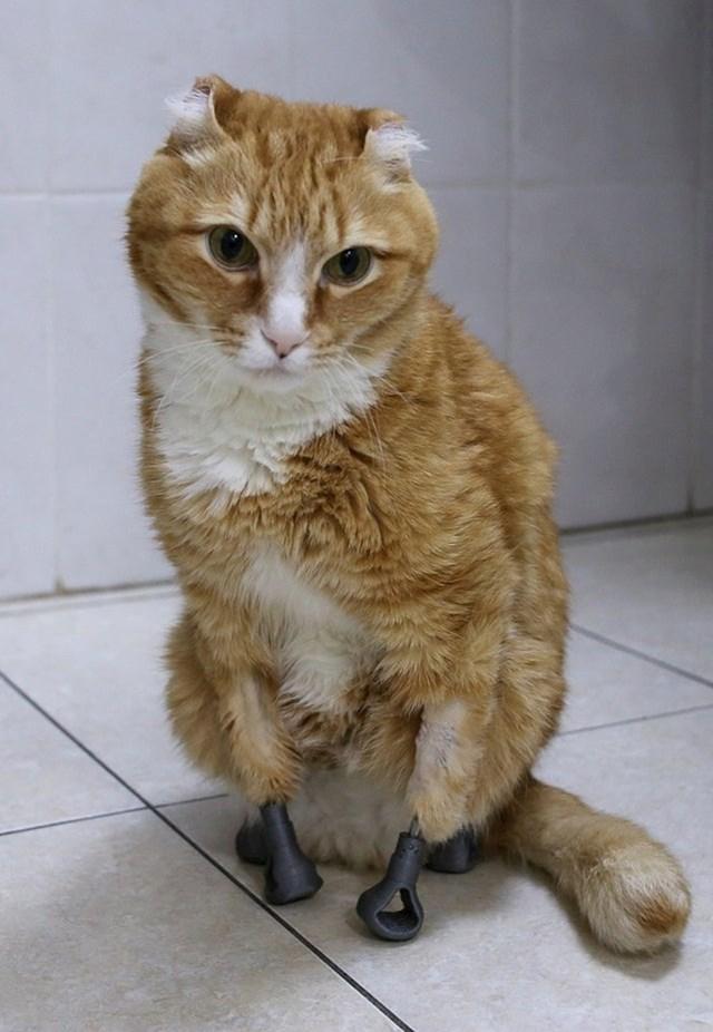 Maca je dobila nove šapice