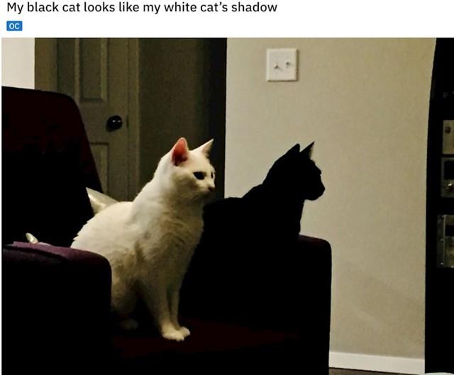 Ovo su dvije mačke