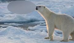 Pogledajte zbog čega je ova slika polarnog medvjeda tako posebna. Uslikano u savršenom trenutku!