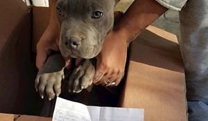 Dječak je ostavio svog psa i pismo u skloništu da ga zaštiti od svog oca zlostavljača