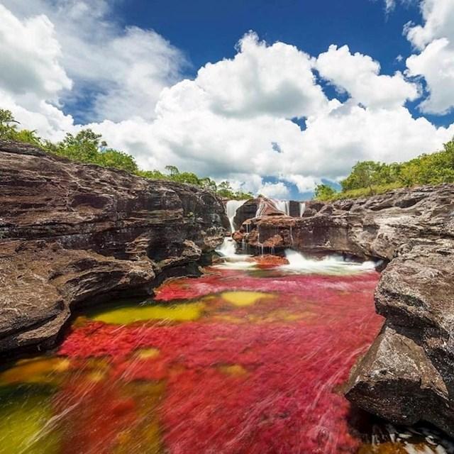Šarena rijeka pod nazivom Cano Cristales u Kolumbiji mijenja boju zahvaljujući biljci koja se zove macarenia clavigera