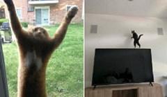 Urnebesna galerija, nevjerojatno je što su sve mačke sposobne