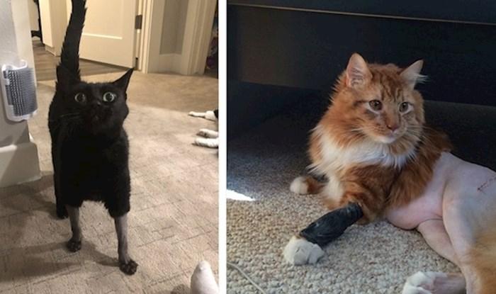 Hrabre mace koje su morale ići na operaciju i sada izgledaju pomalo smiješno