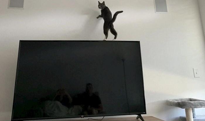 Fotke koje dokazuju da se zakoni fizike ne odnose na mačke