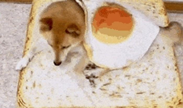 Ovaj pas ima vlasnike s dobrim smislom za humor, njegov krevetić izgleda jestivo