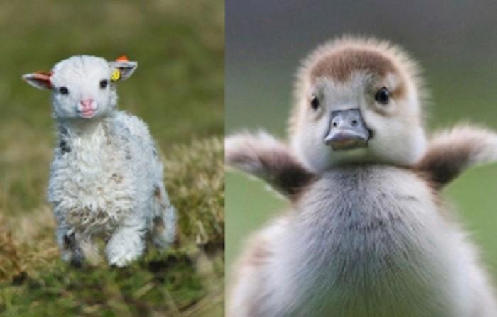 Slike ovih slatkih životinjica popravit će vam i najtmurniji dan