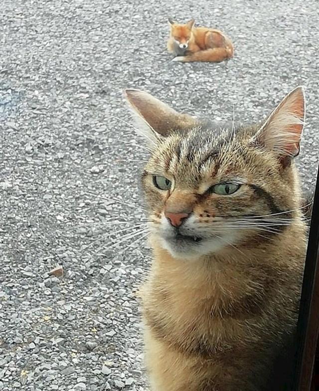 """""""Lisica je navratila do naše kuće, mačka nije bila impresionirana"""""""