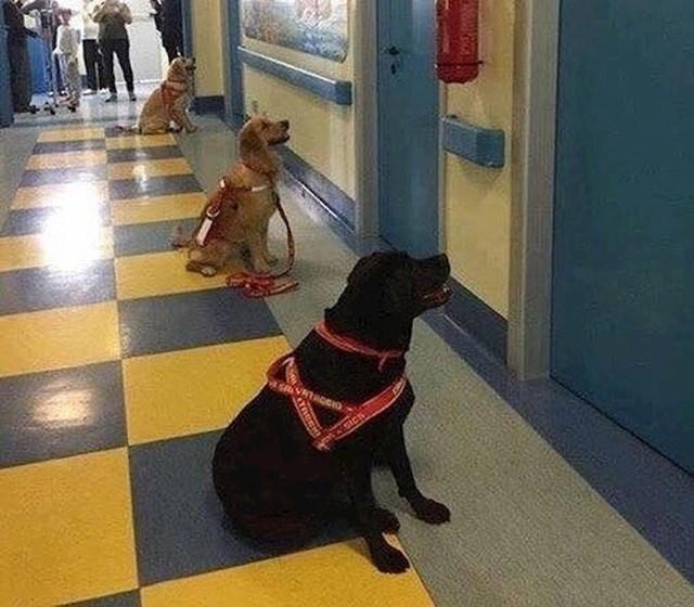Terapijski psi u Italiji čekaju upoznati djecu kojoj pomažu