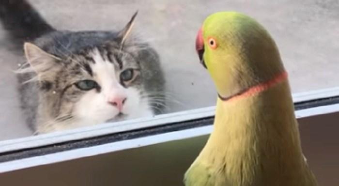 Vlasnici su fotkali svoju papigu koja se igrala skrivača sa susjedovom mačkom