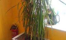 Ljudi u uredu su popadali od smijeha kada su vidjeli u čemu stoji ukrasna biljka