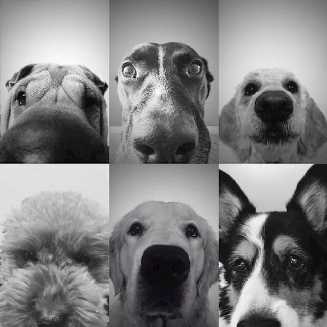 """""""Moji roditelji još nemaju unuke, pa su povješali slike svojih pasa na zid"""""""