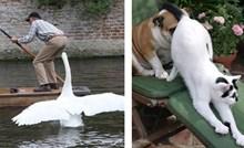 Fotke koje dokazuju da životinje nekad znaju biti prave budalice