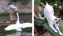 Fotke koje dokazuju da životinje nekad znaju biti prave budale
