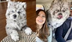 Za ovog psa govore da izgleda kao oblak, postao je viralan zbog svog neobičnog izgleda