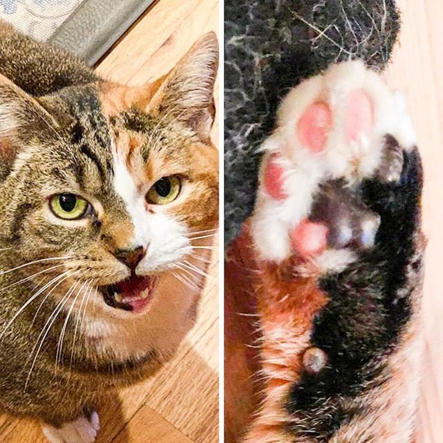 """""""Naša mačka je u dvije boje..."""""""